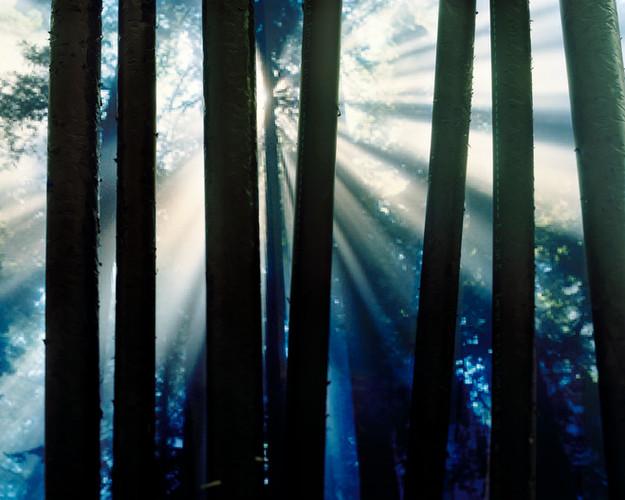 5932a3d9b72e4569-treesPamsharpflat.jpg