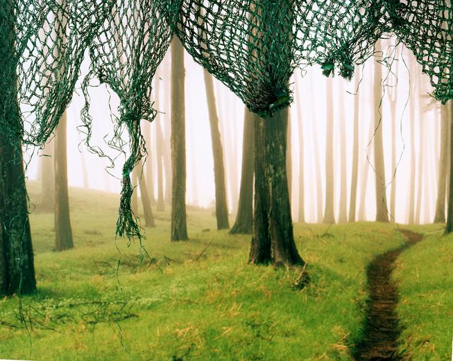 2b1e8ff11f41f409-ForestPath.jpg