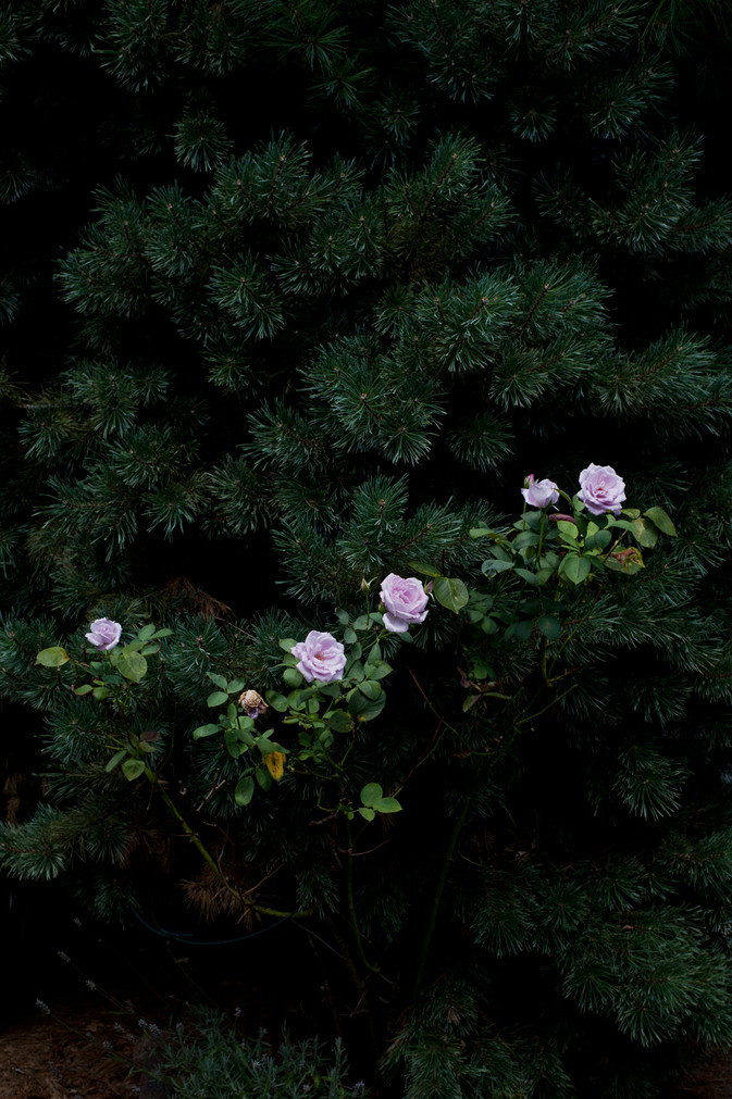 Late Season Blooms