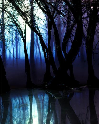 a153a35fc855d5c4-Darktrees.jpg