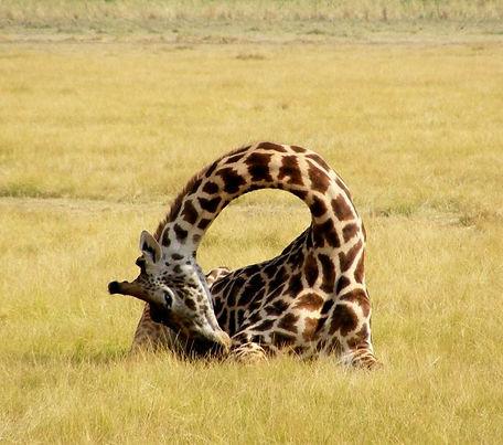 Girafee keyhole.jpg