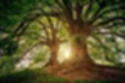 NQ - image arbre 200426.JPG