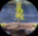 NQ_séances_individuelles_2.png