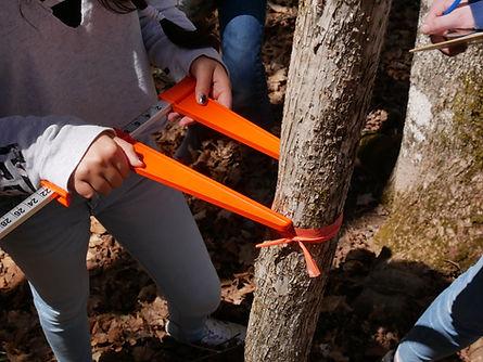 tree workshop.jpg
