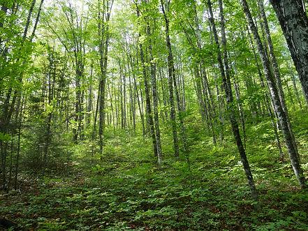 forestscape.jpg
