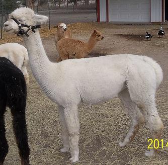 open herd photos 057 (2).jpg