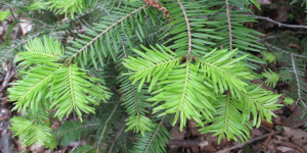Identification des différentes essences d'arbres, leurs propritétés et leurs usages