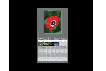2019 junius ikon