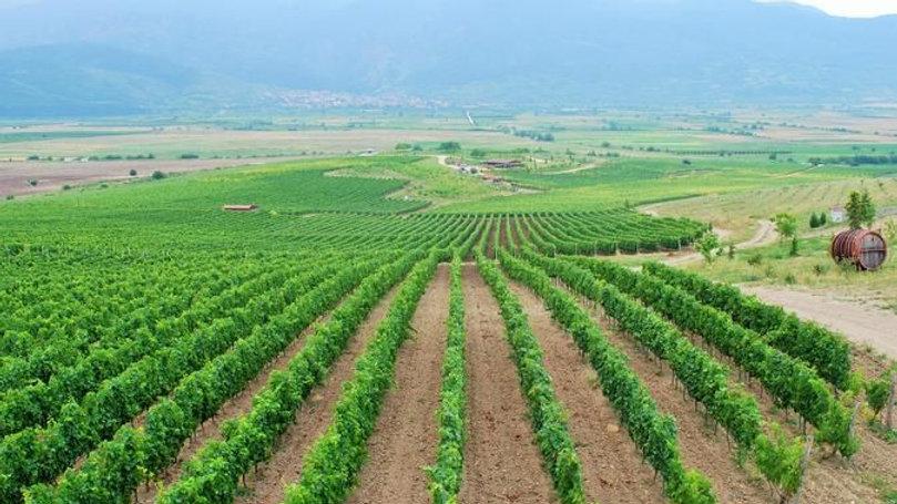 Discover unUSUAL wine regions - en aften kursus