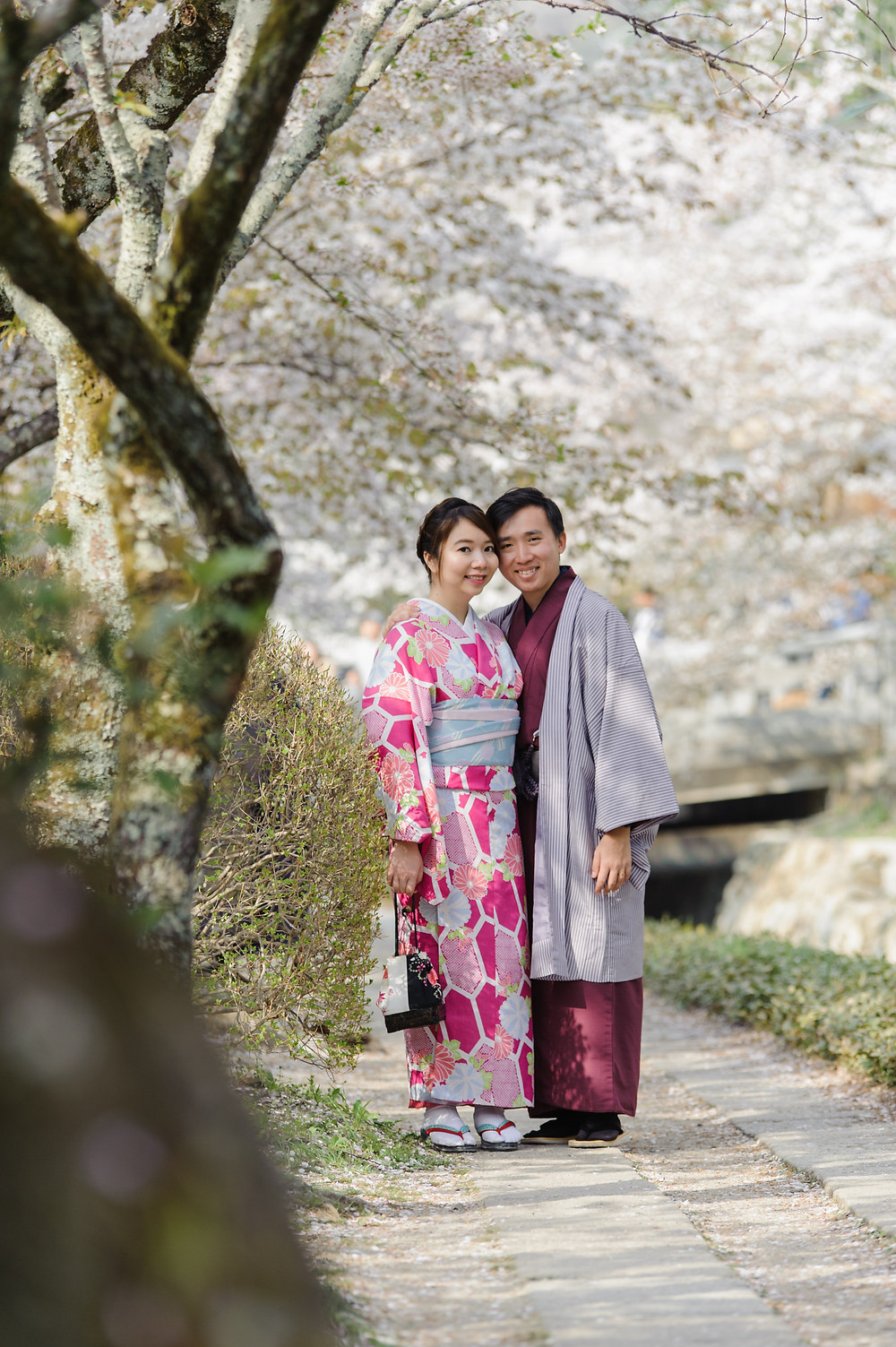 Posing under the Sakura in Kimono