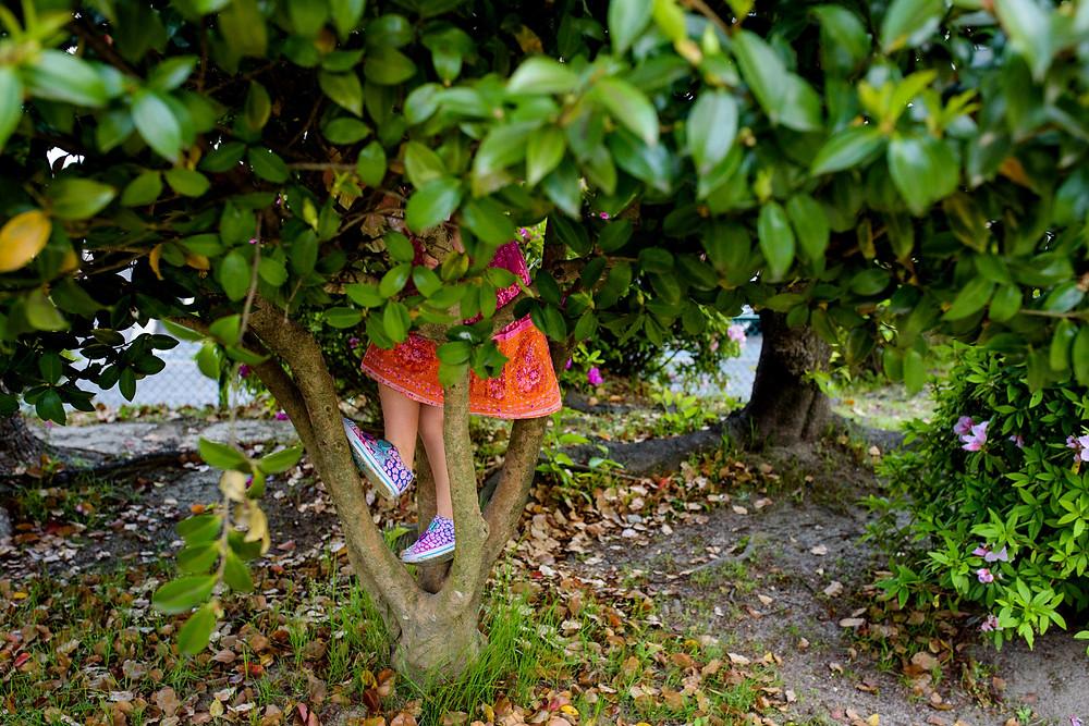 Willa climbs a tree