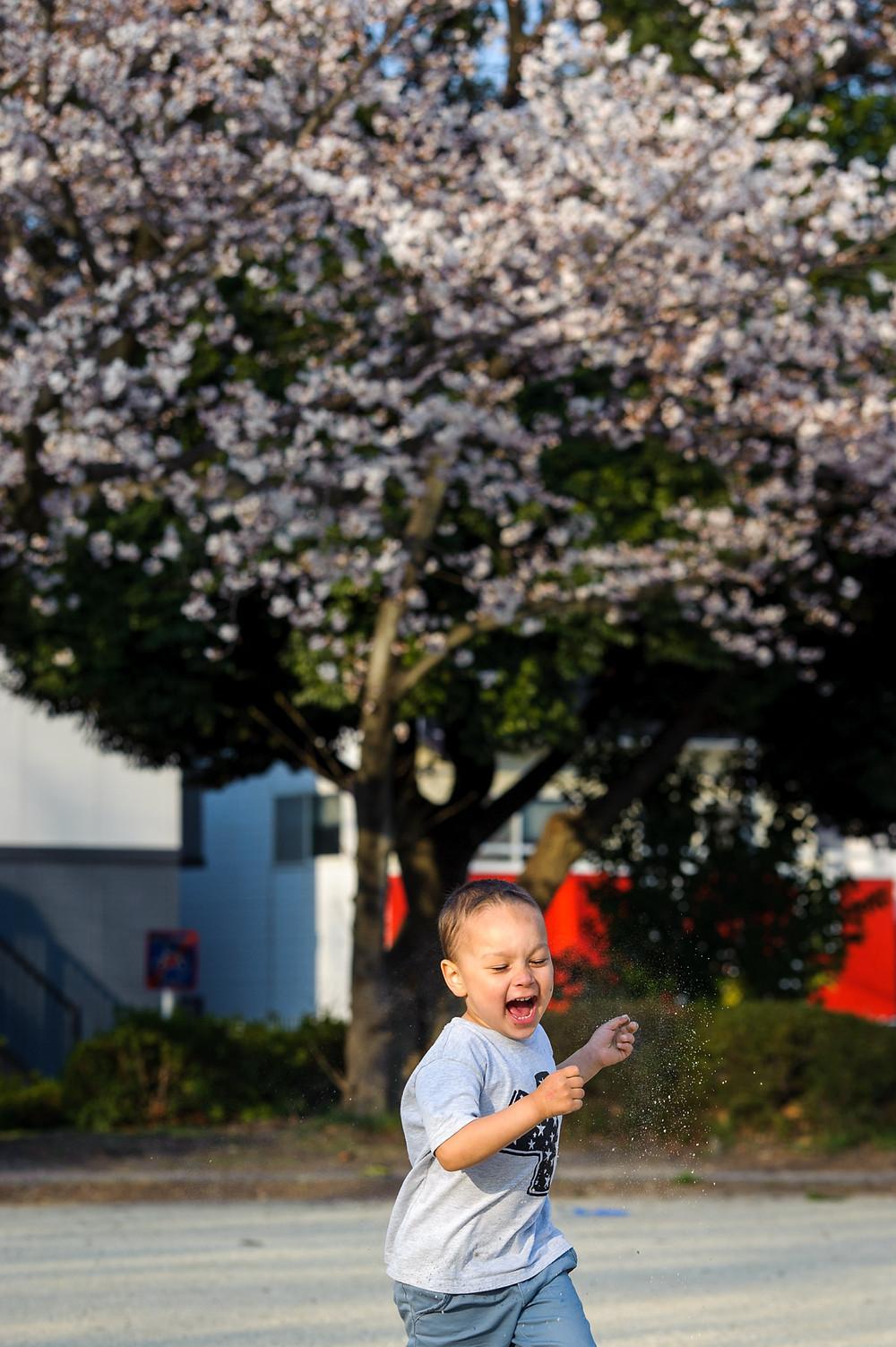 Braxton runs in front of the sakura