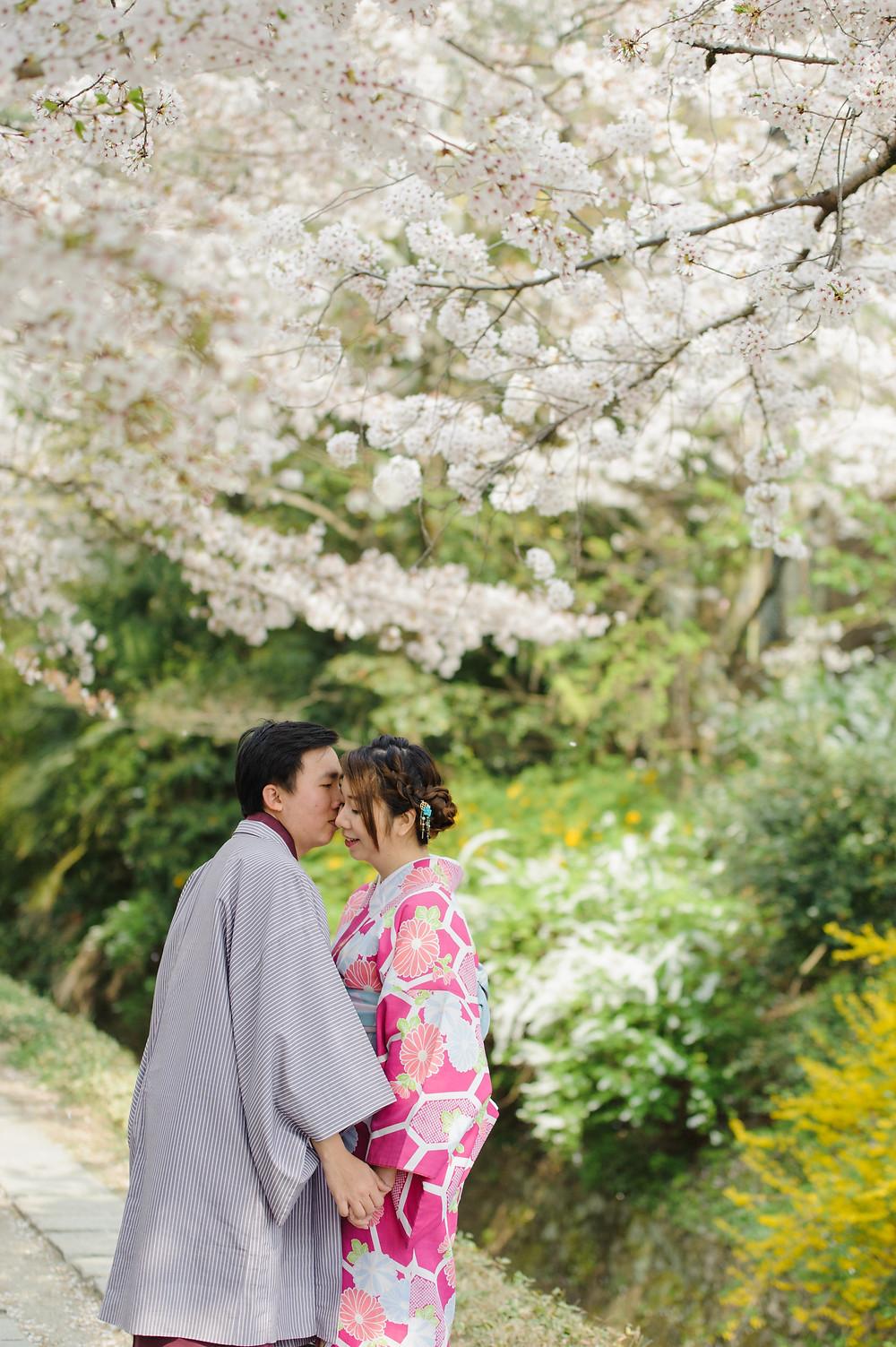 Kissing under the Sakura