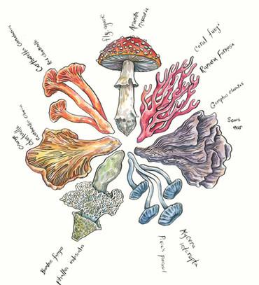 Mushroom Color Wheel
