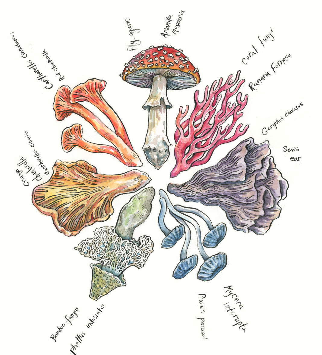 Mushroom Color Wheel, 2019