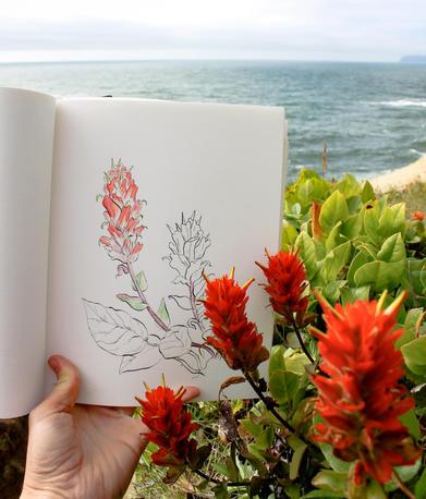 Paintbrush (Castelleja) on the Oregon Coast