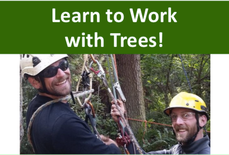 Learn to work with trees!
