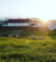 Barn and Lambs.jpg