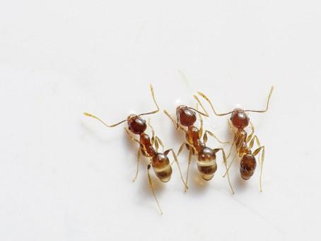 Tenho problemas com baratas e formigas, preciso sair de casa para dedetizar?