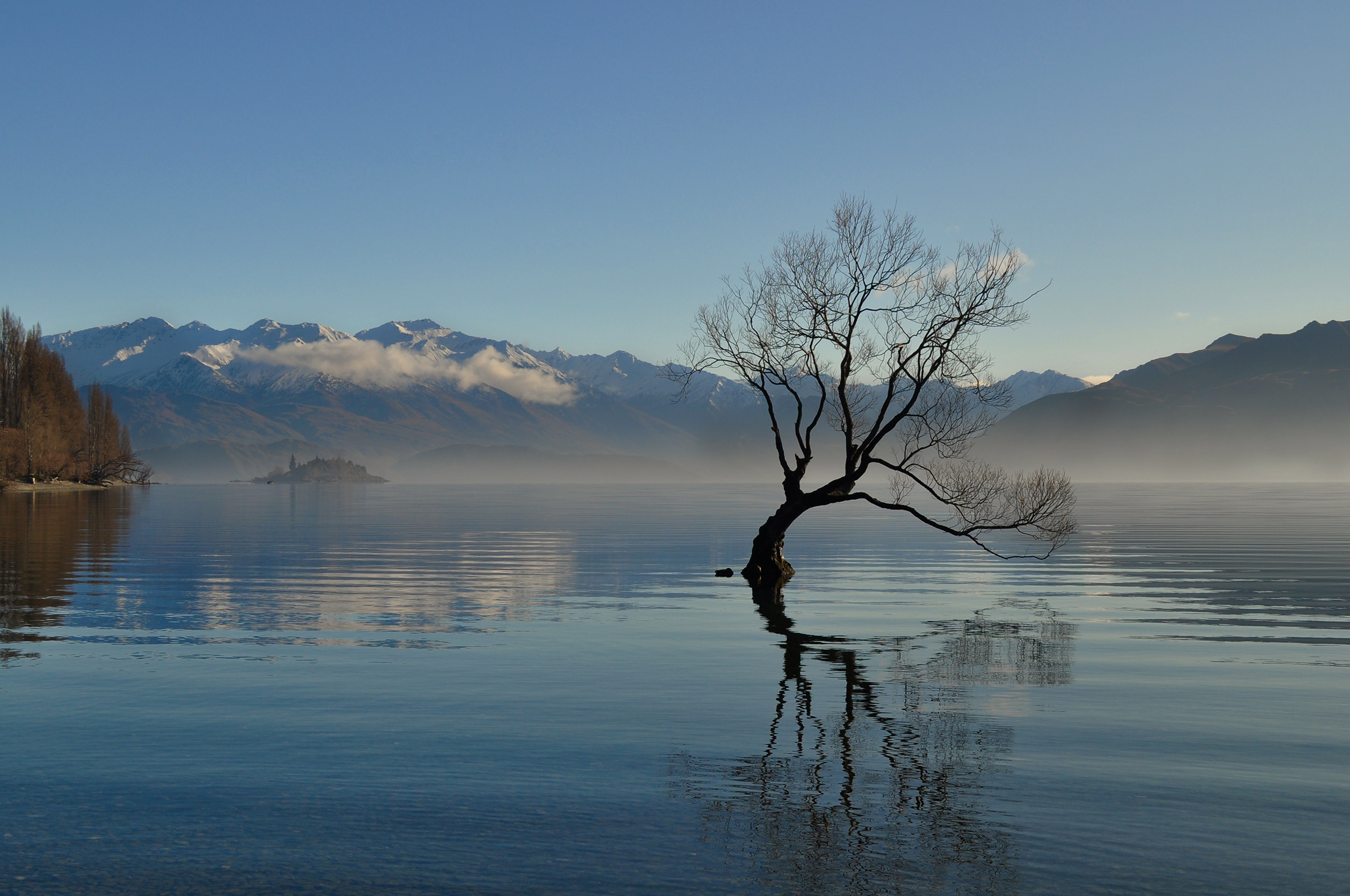 Wanaka Lonely Tree
