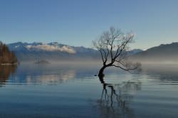 Wanaka Lonely Tree