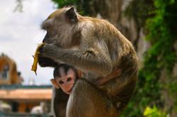 Mummy Monkey