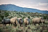 Robin Hurt Safaris, Gamsberg Ranch, Nami