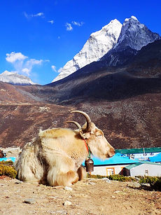 Everest Base Camp tours