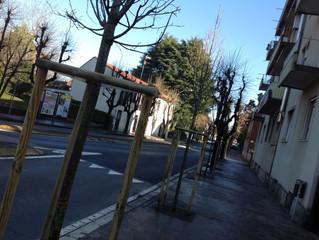 Nuovi filari di alberi lungo le vie del centro e delle frazioni.