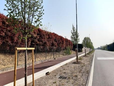"""""""Allevare alberi"""": l'impegno incessante dell'Amministrazione Comunale"""