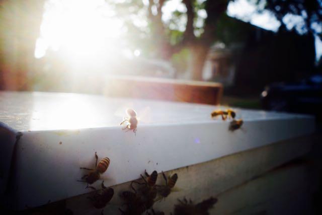 MRT Bee Swarm - 26.jpg