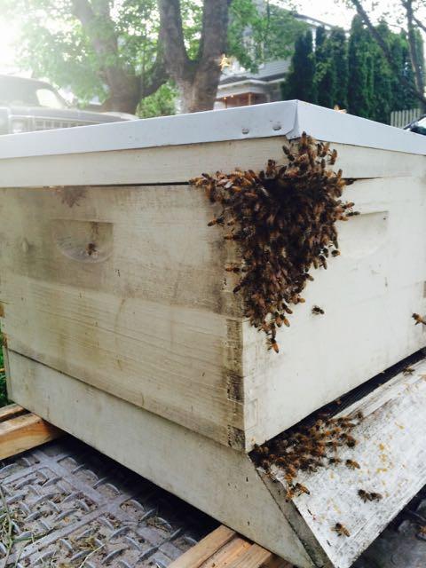 MRT Bee Swarm - 42.jpg