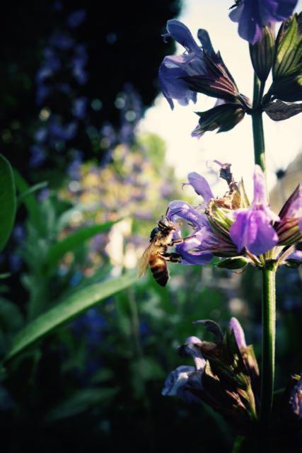 MRT Bee Swarm - 44.jpg