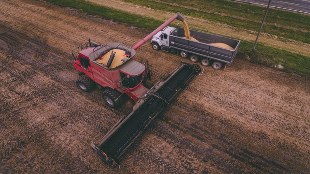 fall harvest of soybeans