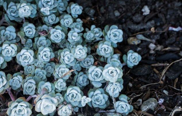 flowers of bremerton, wa