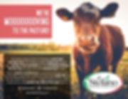 Cow_8.jpg