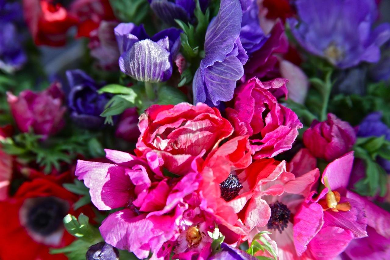 Plants09.jpg