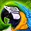 Thumbnail: Quadro Decorativo Arara Canindé Animal de Poder