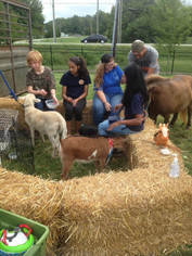 Visit the Unicorn in the petting zoo!