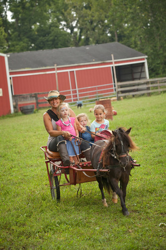 City Ranch-Cart & Pony Rides