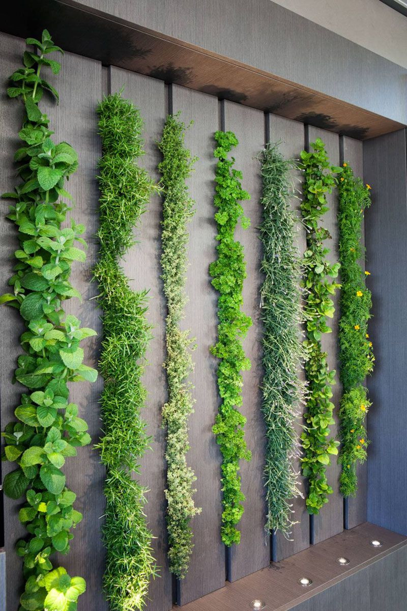 living wall vegetables indoors