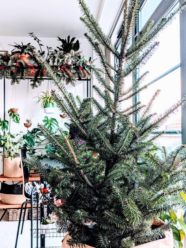 Incorporate houseplants into your home and keep the Christmas tree all year round.