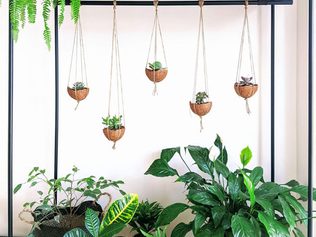 Easy, Cheap, and DIY-able Coconut Shell Planters