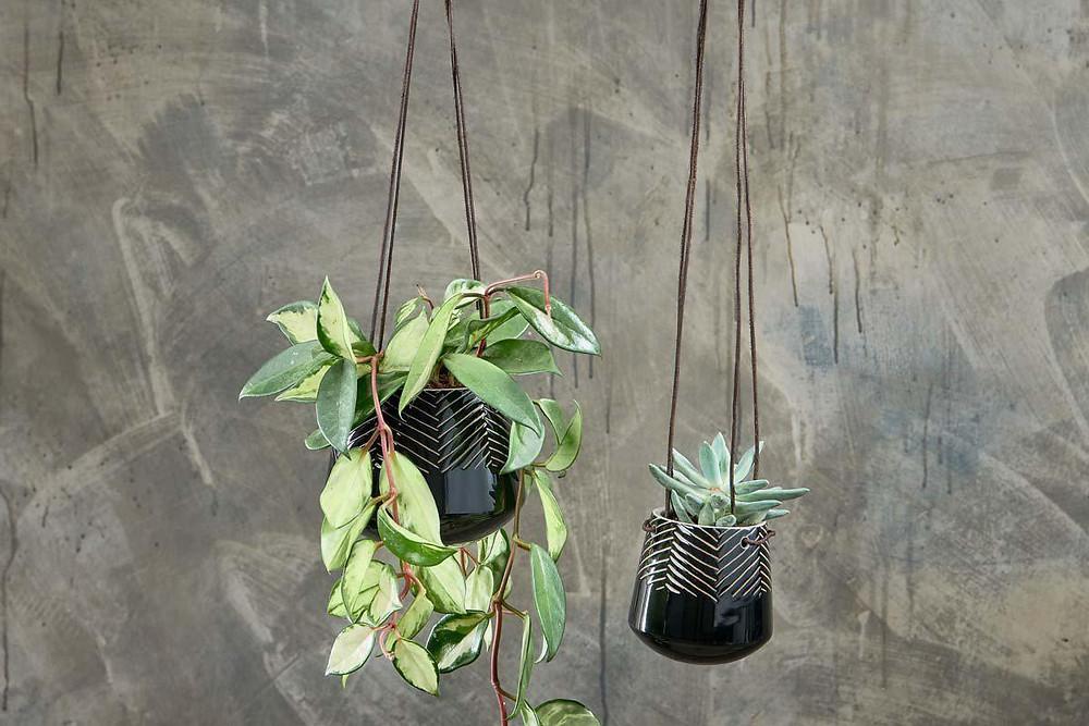 Relaxing bathroom decor, hanging planter.