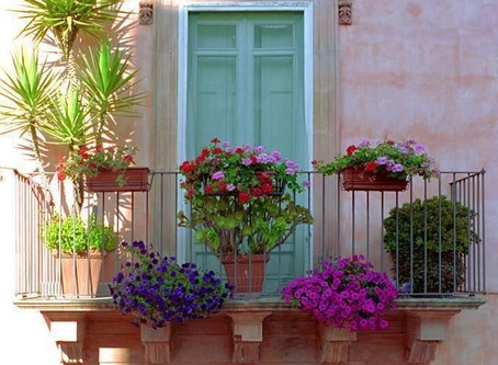 How to Choose Perfect Plants for Your Juliet Balcony
