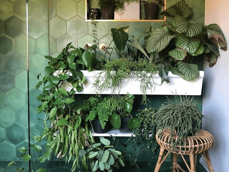 Jungle In A Windowless Bathroom, Dream or Reality?