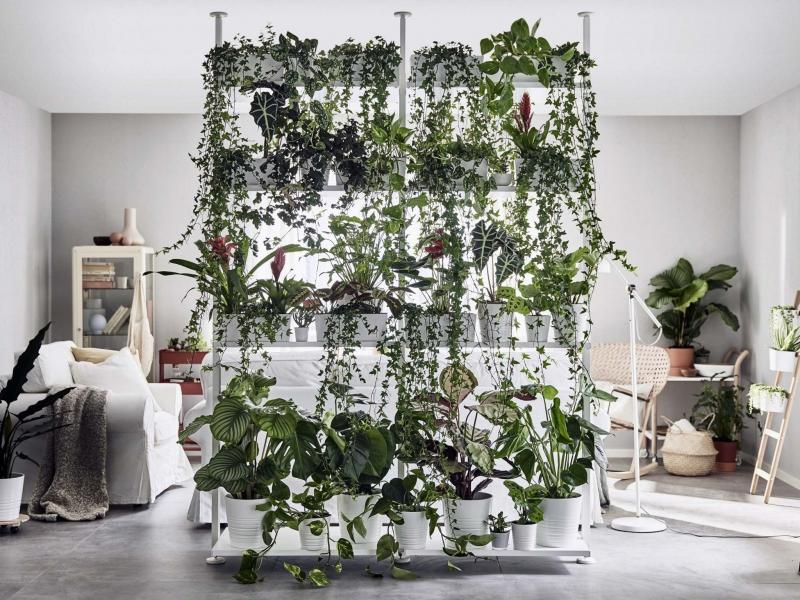 indoor plants as a room divider