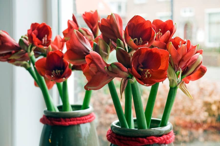 What Autumn Flower Bulbs Can Thrive Indoors