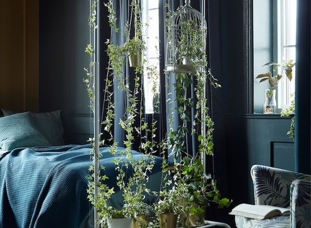 How to Use Indoor Plants As a Room Divider