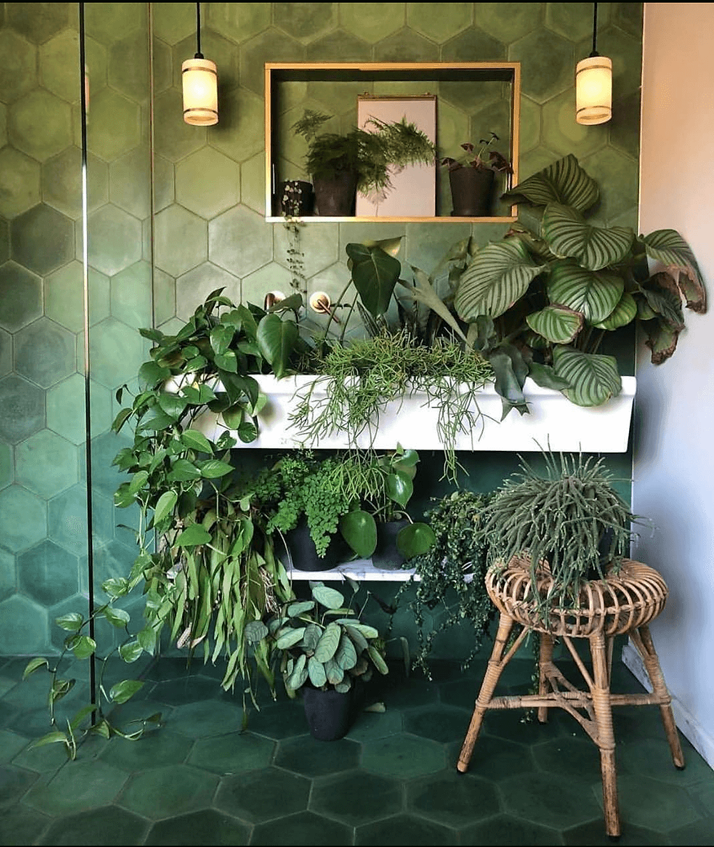 Jungle in a bathroom without any windows.
